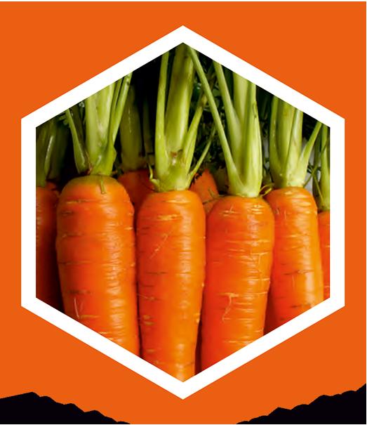 produkcia-mrkva