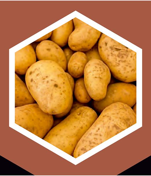 produkcia-zemiaky