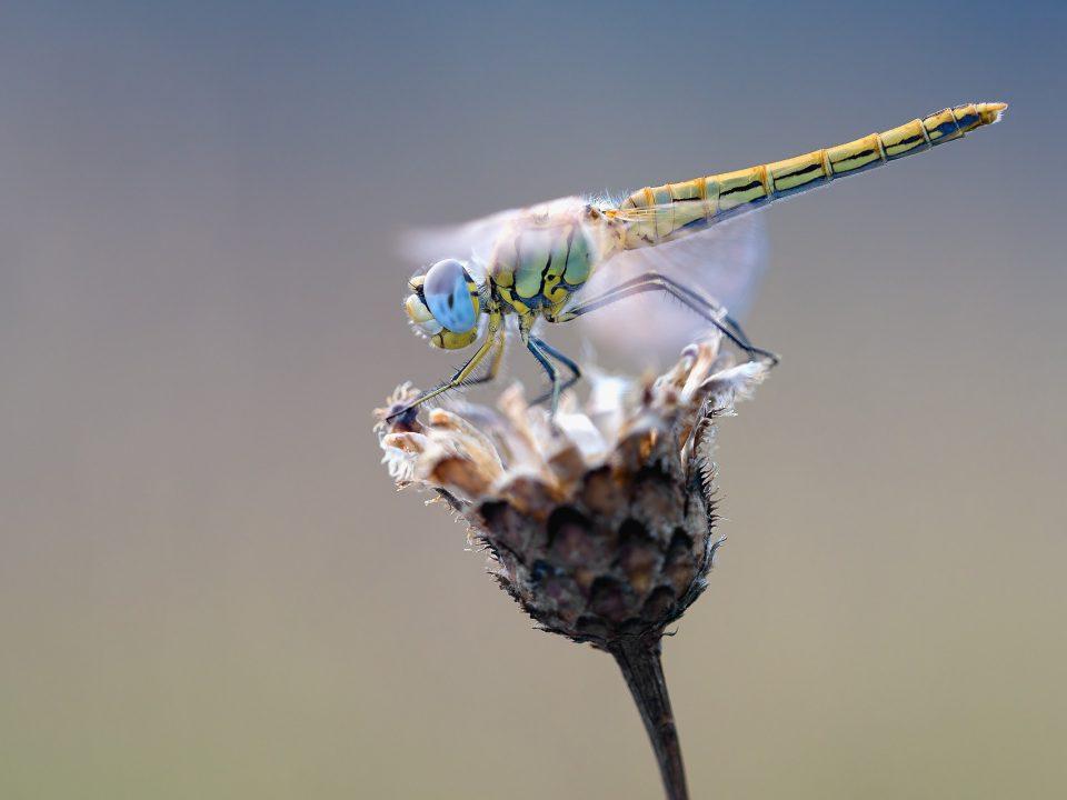 hmyz kvet